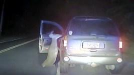 Deer Tries to Break Into Car After Being Hit in NJ