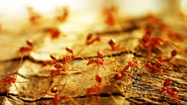 Woman Dies From Fire Ant Attack 1 Day After Mother's Death