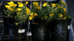 Stock Up on Tax-Free Weekend for Gardeners