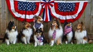 Your Patriotic Photos 2015