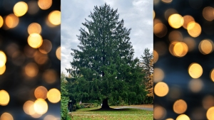 Revealed! This Is Your 2019 Rock Center Christmas Tree