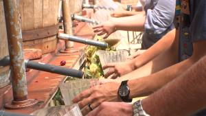 Grapevine Gets Ready for Grapefest '16
