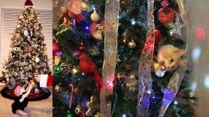 Holiday Photos - November 30, 2015