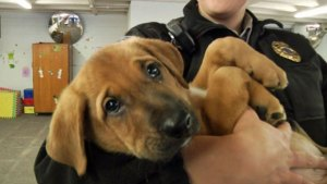 Dumpster Pups Raised in State Penitentiary