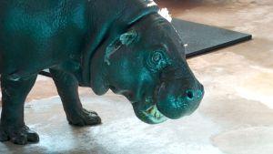 A 'Hippopotamus For Christmas' Wish Comes True