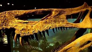 Ultimate Dinosaurs at the Perot Museum