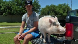 Fort Worth Pig Has Huge Instagram Following