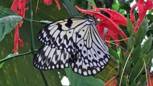 Butterflies in the Garden Exhibit Opens in Fort Worth
