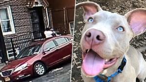 NY Woman Caught on Camera Choking, Tossing Puppy: SPCA
