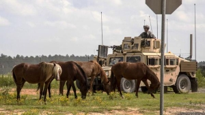 Wild Horses Relocated from Military Base to North Texas