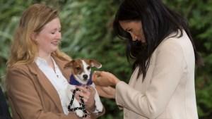 Meghan Markle Shares Message on the Joy of Pet Adoption