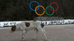 Group Hopes to Place Stray Sochi Dogs
