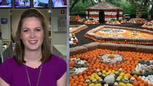 Sarah's Weekend Picks: Halloween, Restaurants