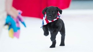 'Today' Show Puppy's Name Is Revealed