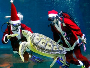 Weird News Photos: Holiday Edition