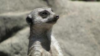 Comedian Plants Fake Signs at LA Zoo