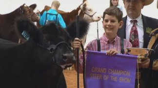 Lunchbox Named Grand Champion Steer