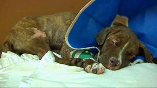 Puppy Fights for Life After Being Set on Fire