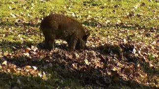 Feral Hog Spotted Near Popular Dallas Outdoor Spot