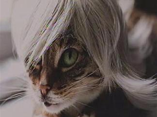 Wigged Out Kitties