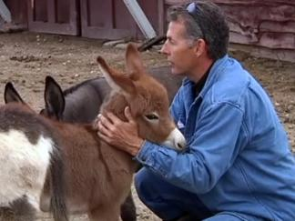 Couple Offers Reward for Return of Stolen Donkey