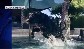 Dog Days of Summer - Aug 2, 2018