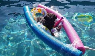 Dog Days of Summer - July 14, 2016