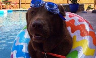 More Dog Days of Summer - June 10, 2016