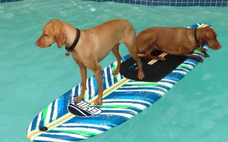 Dog Days of Summer - June 14, 2016