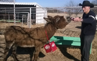 Dr Pepper-Drinking Texas Donkey Returns Home After 2 Years