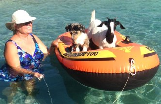 Dog Days of Summer - July 22, 2016