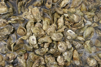 Oyster Harvesting Closed Along Portions of TX Coast