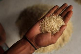 Texas Rice Farmers Hope for Increased Trade Opportunities