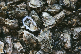 Oyster Reefs Could Help Fight Erosion On Texas Coast
