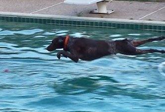 More Dog Days of Summer - June 14, 2016