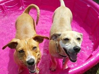 Dog Days of Summer - June 7, 2016