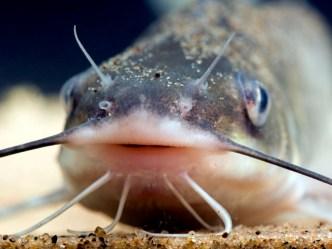 USDA: Louisiana Co. Recalls Catfish Products