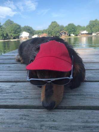 Dog Days of Summer - July 6, 2018