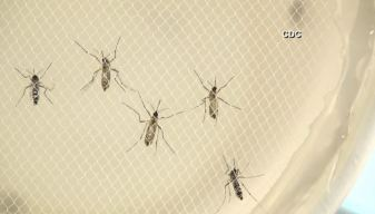 Zika Virus Possibly Spread Through Sexual Contact