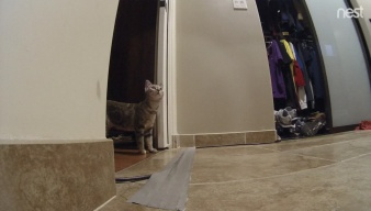 Cat Senses Earthquake and Scrams