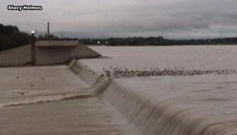Ducks Enjoy Flooded White Rock Lake