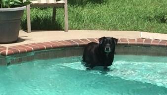 Dog Days of Summer - June 22, 2018