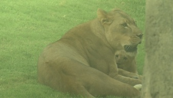 Dallas Zoo Hosts Annual Dollar Day