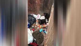 Puppies Found in Texas Dumpster
