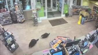 Beavers Go Shopping
