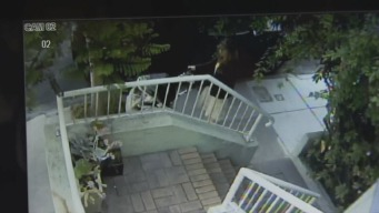 Video Shows Calif. Package Thief Posing as Mother With Stroller
