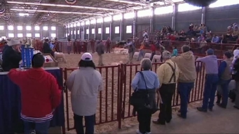 Great Weather Brings More to Stock Show