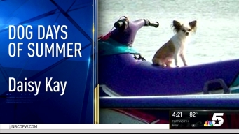 Dog Days of Summer - August 26, 2016