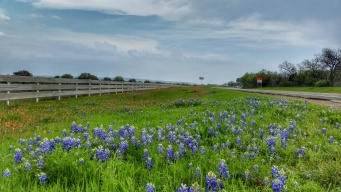 Experts Advise Families to Wait for Bluebonnets