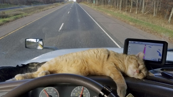 Trucker's Missing Cat Reappears After 400-Mile Drive